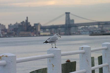 East River seagull experiment during photography class...